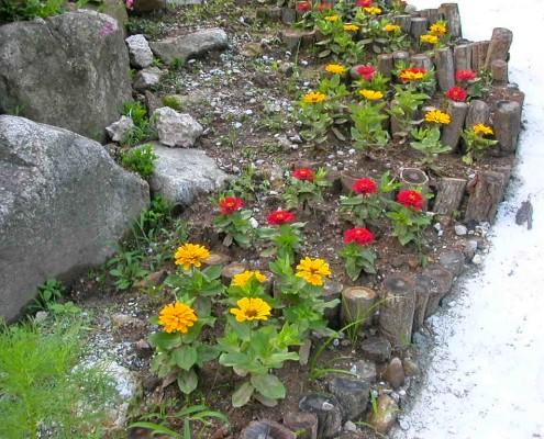 백일홍정원