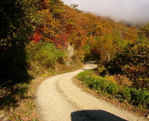 산림욕장산책길